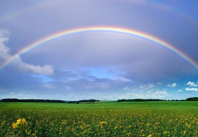Trade in 2019 – somewhere over the rainbow…